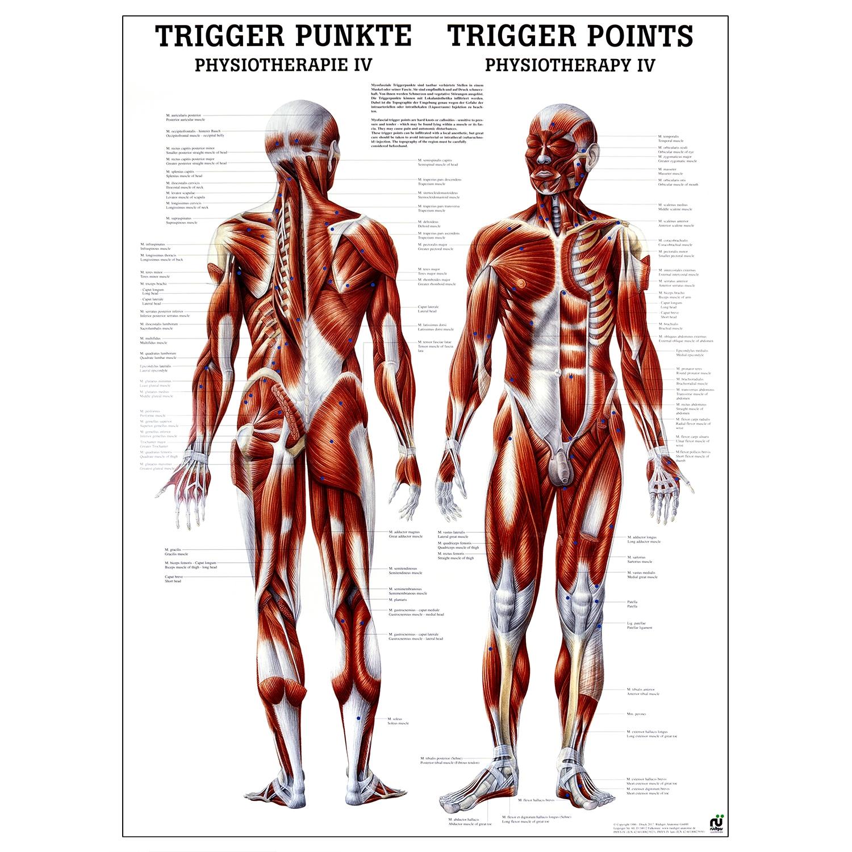 Poster triggerpoints - gelamineerd - 50 x 70 cm